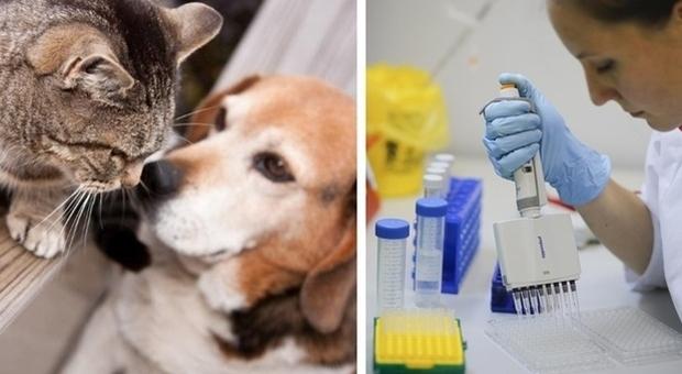 Vaccino Covid per animali, in Russia prodotte le prime dosi: si lavora per registrarlo in Ue
