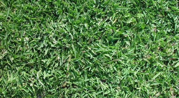 L'odore dell'erba appena tagliata è un grido di aiuto: ecco perché le piante lo emettono