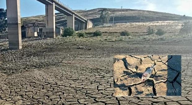 Il lago artificiale prosciugato. (Immagini diffuse da WWF Caltanissetta, WWF Enna e WWF Sicilia Centrale)