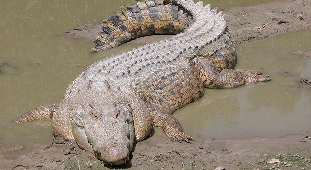 Bimbo di dieci anni viene attaccato e divorato da un coccodrillo davanti ai fratelli più piccoli