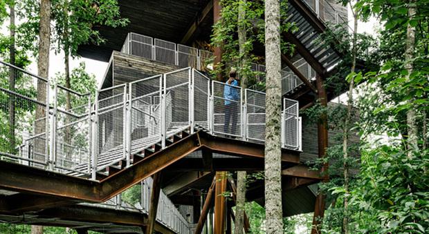 Bella e green benvenuti nella casa sull 39 albero for Piani casa dei caraibi
