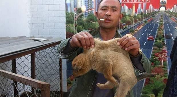 Un venditore di cani (immagine pubblicata da Ansa)