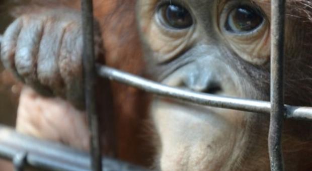 Uno degli animali rinchiusi al Pata Zoo di Bangkok (immagine di Mark J inviata a Trip Advisor)