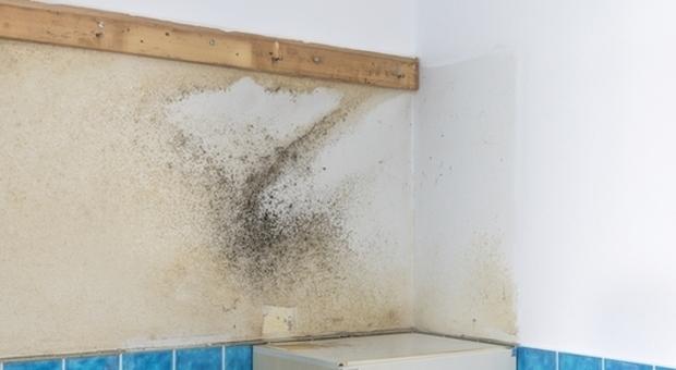 Parete Dacqua In Casa : Umidità un pericolo da eliminare per la salute della casa