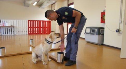 A Ladispoli la polizia addestra i suoi commissari Rex