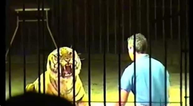 Ettore Weber ucciso dalla tigre, l'appello della moglie: «Non sopprimete il felino»