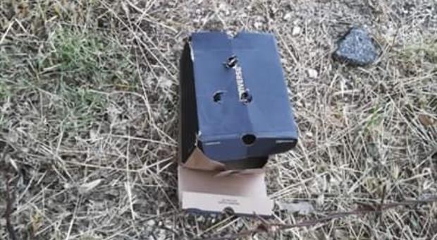Gettati via dentro ad una scatola il triste destino di tre cuccioli