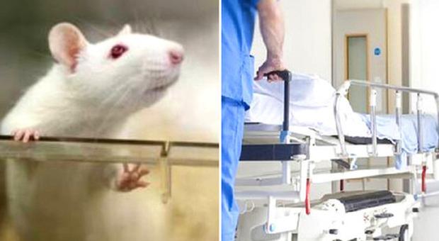 Febbre del topo, cos'è l'infezione che ha contagiato oltre 200 persone in Slovenia: sintomi e cura