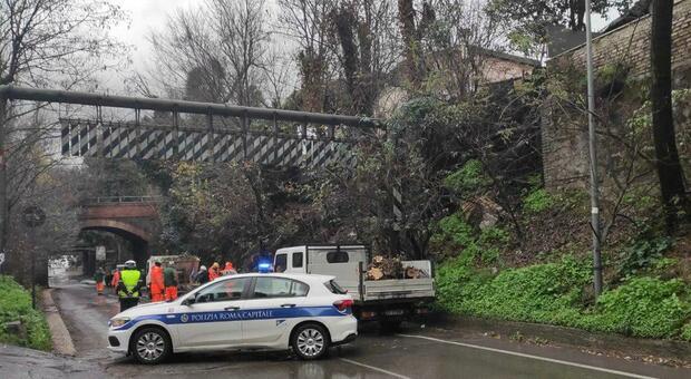 Roma, grandinata lampo: cade albero in via di Porta Furba