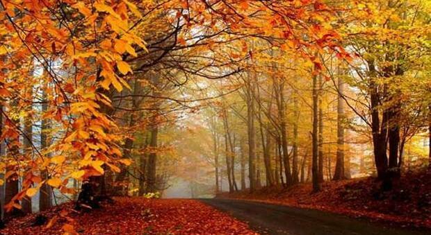 Foliage in Italia: parchi e boschi da visitare in autunno