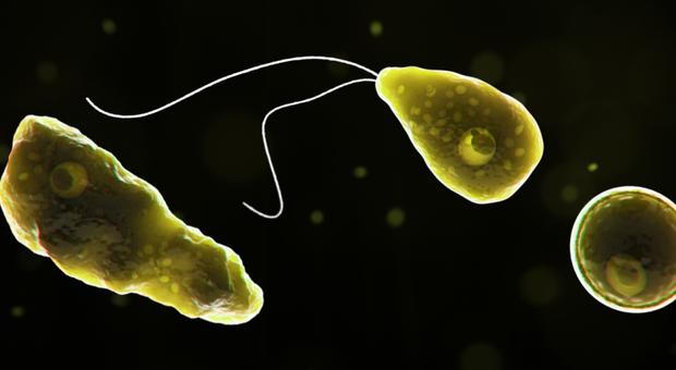 Ameba mangia-cervello uccide un surfista infezione batterica dopo un tuffo in piscina