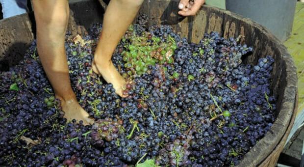 Week end nel Viterbese alla scoperta di banchetti etruschi, prodotti tipici, vigne e vendemmie