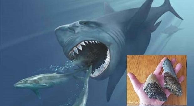 Scoperte le reali dimensioni del Megalodonte. Era lungo oltre 16 metri. (immagine grande Ansa, dettaglio denti fossili Remo Sabatini)