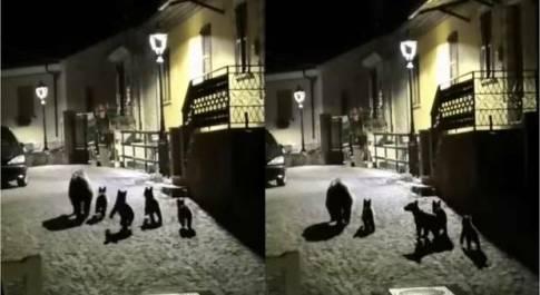Mamma orsa con i suoi quattro cuccioli a spasso nella notte a San Sebastiano dei Marsi (immagini e video pubblicati da Ridi Abruzzo su Fb)