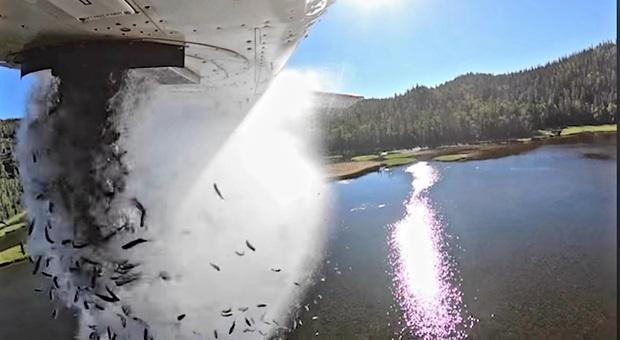 Il momento del lancio dei pesci dall'aereo. (Immagini e video pubbl su Fb da Utah Division of Wildlife Resources)