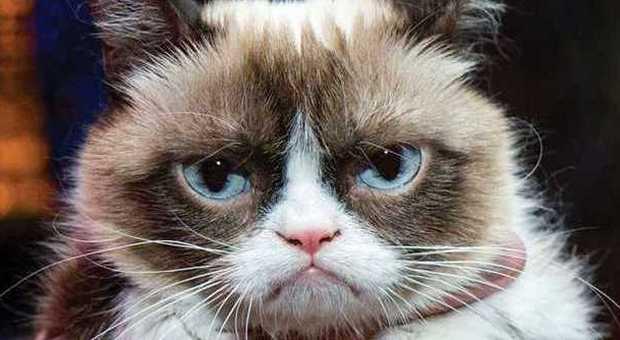 Grumpy Cat è Il Gatto Più Ricco Del Mondo 100 Milioni In Due Anni E