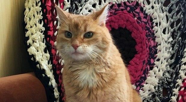 Il gatto scompare ma torna a casa dopo tre anni, il padrone incredulo: «Ero sicuro fosse morto»