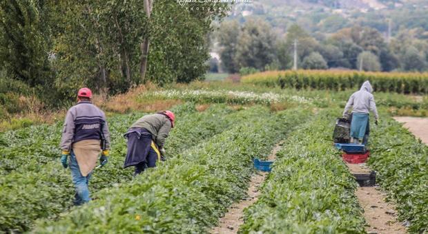 Blitz della polizia contro il lavoro nero a Latina: verifiche in un'azienda agricola sulla Migliara 43 - Il Messaggero