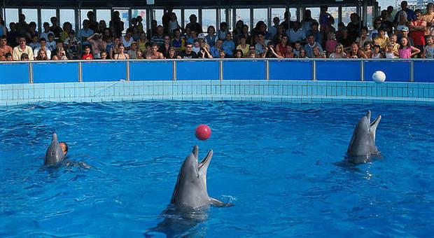 Il delfinario di Rimini prima della chiusura (immagine pubblicata da Ansa)