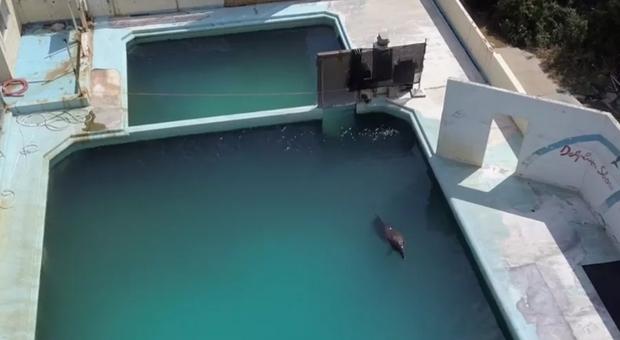 Morta Honey, la femmina di delfino più sola del pianeta. Era stata catturata a Taiji. (immag pubbl da Dolphin Project)