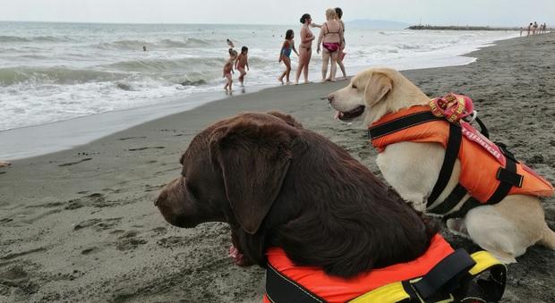 Montalto di Castro, i cani Kika, Kira ed Eva salvano un uomo che stava annegando