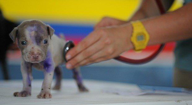 Coronavirus. Il cane sta male ma il veterinario è chiuso: fermata e multata mentre lo porta da un altro fuori comune