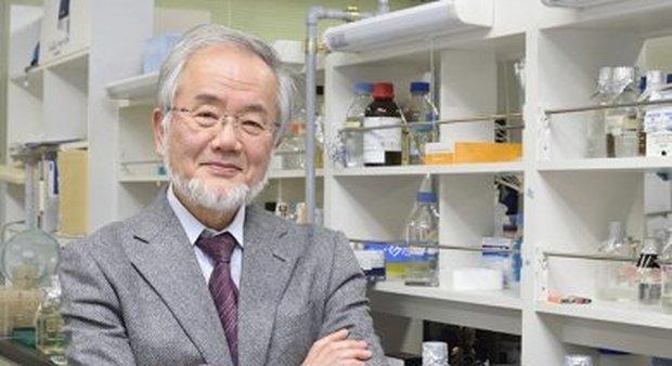 Il Nobel per la medicina al giapponese Ohsumi: scoprì i meccanismi dell'autofagia