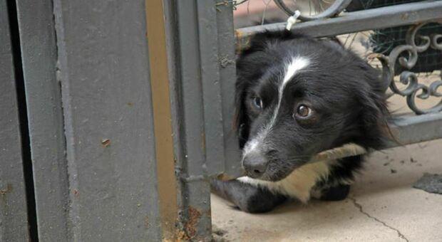 Benevento, anziano muore per salvare il proprio cane