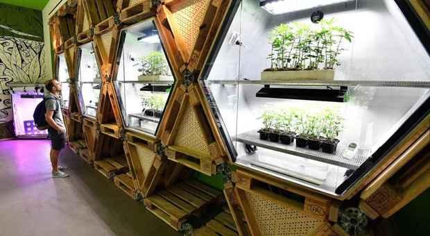 Cannabis terapeutica pronta per Piazza Affari, atteso ok Borsa a fondo di settore