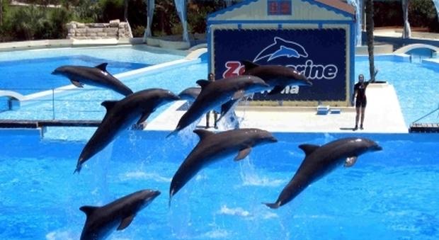 Accuse ai delfini di Zoomarine: «Quei pesci dovrebbero essere più simpatici», l'incredibile recensione su TripAdvisor