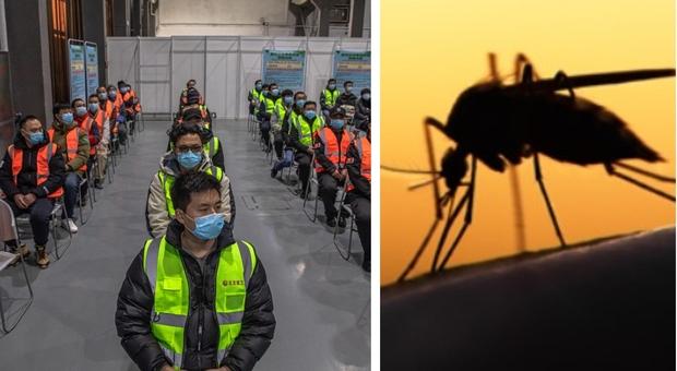 «La Cina ora è una nazione libera dalla malaria»: la certificazione dell'Oms