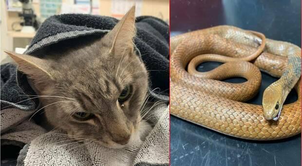 Il gatto eroe che ha dato la vita per proteggere due bambini: così Arthur li ha salvati da un serpente velenoso