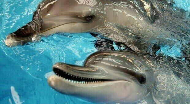 Rimini, delfini maltrattati: confermate una condanna e un'assoluzione. Lav: «Valutiamo ricorso»
