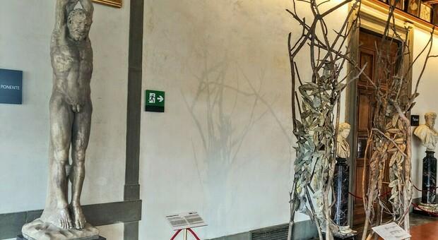 """Gli Uffizi """"raddoppiano"""", a Firenze arrivano gli alberi di Penone e all'Isola d'Elba sbarcano i segreti di Napoleone"""