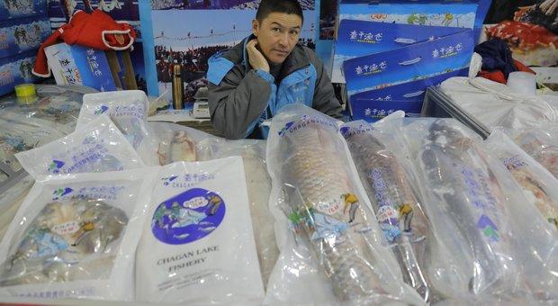 Cina: «Colpa del salmone europeo per l'epidemia di casi a Pechino». La Norvegia si difende