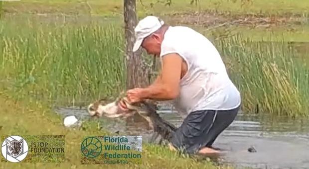 Il momento del salvataggio del suo cucciolo dalle fauci dell'alligatore (immagini e video diffusi da CBS12 su Fb)
