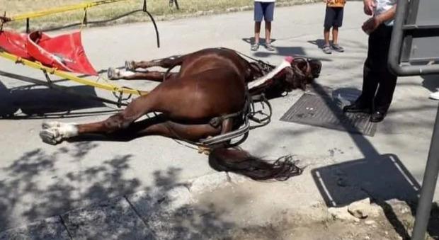 Cavallo morto a Caserta, la Reggia ferma le botticelle. Il sindaco: «Animale non autorizzato al trasporto»