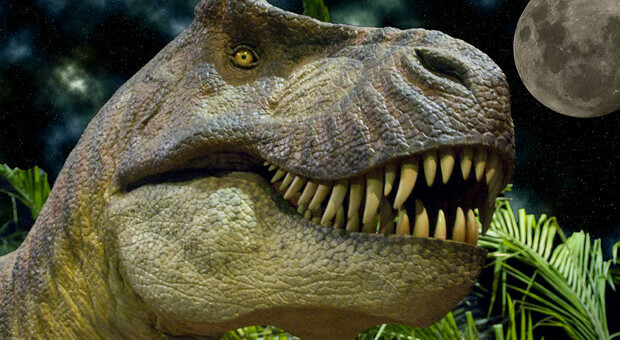 Dinosauri, i paleontologi: «Tirannosauro feroce ma lento, al massimo raggiungeva i 29 km l'ora»