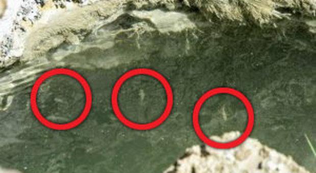 Pesci nel Mar Morto come nella profezia di Ezechiele: «Presagio della fine del mondo»