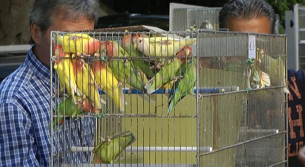 Sagra degli Osei di Sacile, migliaia di uccellini in vendita. «Fiera fuori dal tempo»