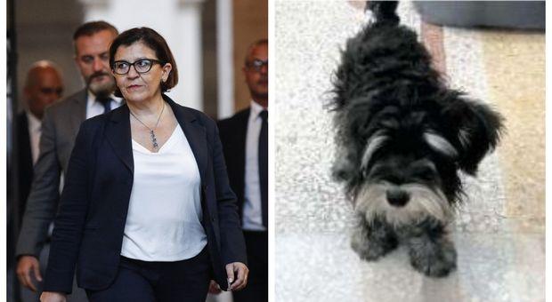 Addio alla casa, Il cane della Trenta scortato al ministero