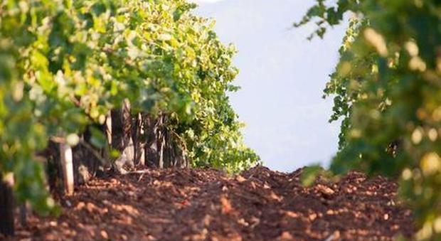 L'agricoltura bio e i suoi pesticidi: ecco come il terreno viene inquinato da metalli pesanti