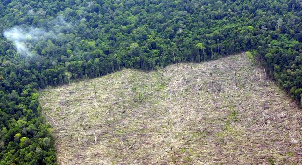 Nel 2018 sparita una foresta grande come l'Inghilterra