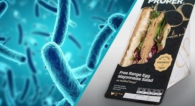 Listeria, morti tre pazienti in ospedale: avevano mangiato panini di pollo contaminati