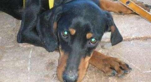 Smarrita in montagna, cammina per 50 km: cagnolina ritrovata dopo due mesi