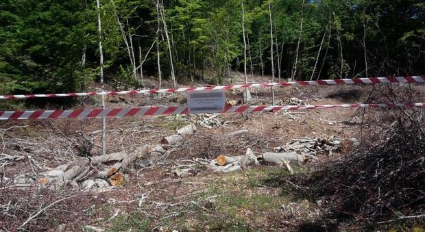 Rieti, taglio illecito di una faggeta, sequestrati 14 ettari di bosco, scattano anche le denunce
