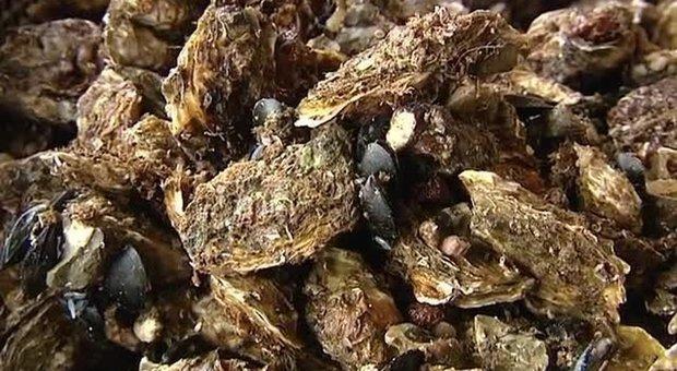 Ostriche francesi contaminate