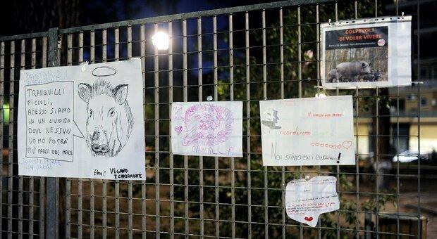 Cinghiali a Roma, il Campidoglio: «Ora si cambia, stop alle uccisioni in strada»