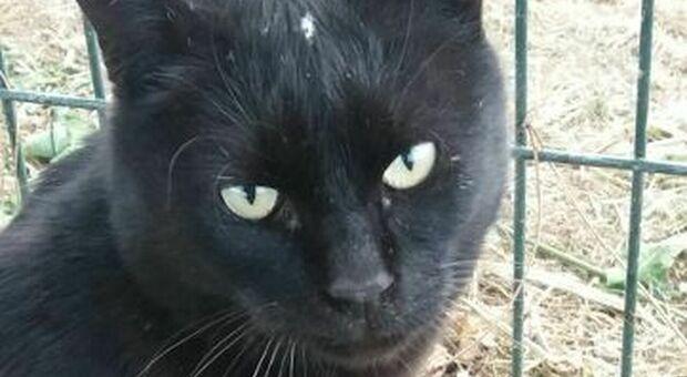 In foto il gatto Frappè