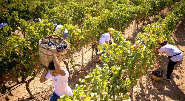 Boom di italiani che vogliono lavorare in agricoltura: è l'effetto coronavirus